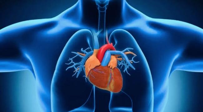 Kalp kası iltihabı nedir, Miyokardit ne demek, zararları nelerdir